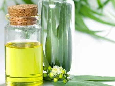 eucalyptus-essential-oil hangover