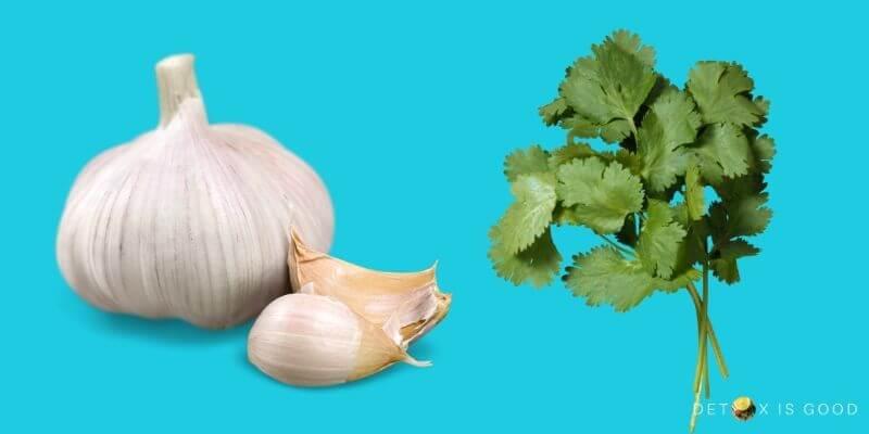 garlic cilantro